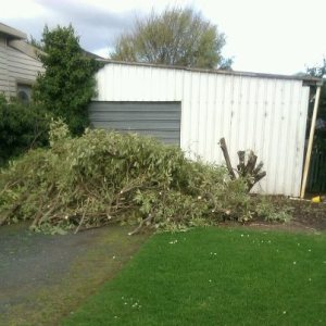 Tree felled for new driveway