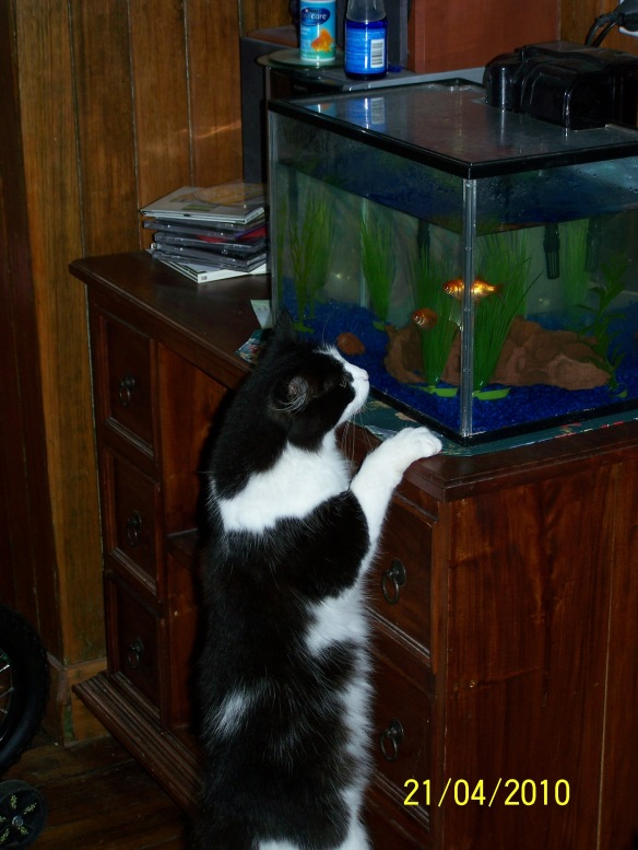 Maggie and the goldfish